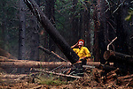 August 11, 1990 Yosemite National Park  --  A-Rock (Arch Rock) Fire  -- Firefighter Jack McCormick cuts down dead tree. The Arch Rock Fire burned over 16,000 acres of Yosemite National Park and the Stanislaus National Forest.  At the same time across the Merced River, the Steamboat Fire burned over 5,000 acres of both Yosemite National Park and the Sierra National Forest.
