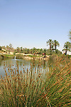 Israel, Park Sapir, an oasis in the Arava