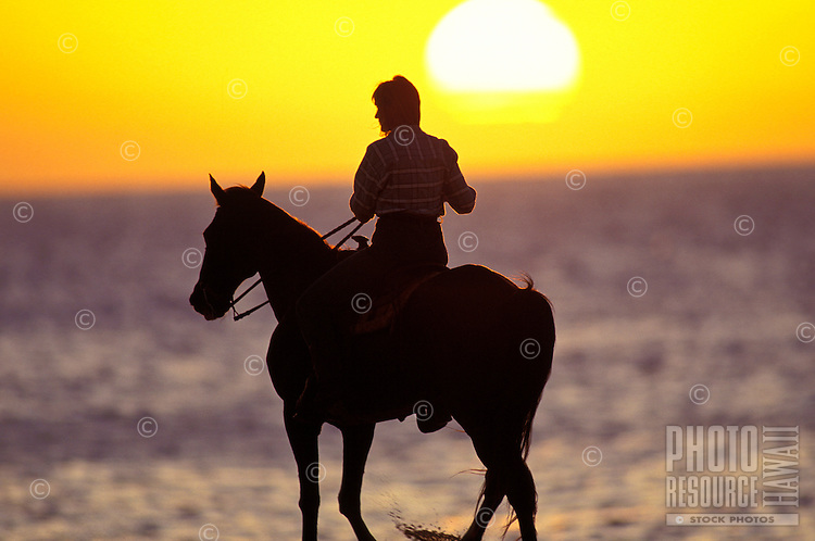 Woman horseback riding along the waters off sunset beach during sunset