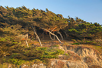 Trees line the shoreline cliffs at Golden Gate National Recreation Area in San Francisco, California