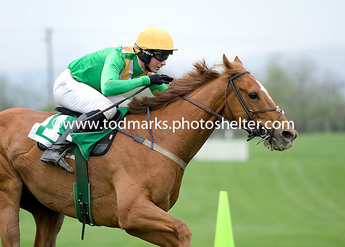 A tight shot of Darren Nagle and Decoy Daddy racing all alone to the wire in the Temple Gwathmey.