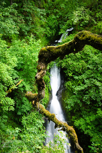 Waterfall at Shepherd's Dell, Columbia River Gorge, Oregon