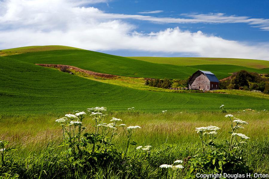 Barn amid fields in Washington State Palouse region.