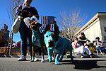 Michelle Rendleman from Carson City took part in the annual Nevada Day Parade with her dogs Daisy and Gage in Carson City, Nev., on Saturday, October 28, 2017. <br /> Photo by Lance Iversen/Nevada Momentum