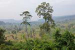 View From Phnom Kulen