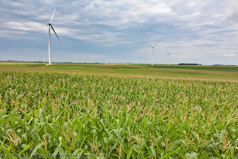 Wind power turbines in the agricultural fields of Minnesota.