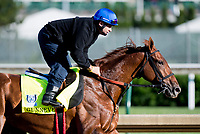 LOUISVILLE, KENTUCKY - MAY 02: Gunnevera, owned by Peacock Stables, LLC and trained by Antonio Sano, exercises in preparation for the Kentucky Derby at Churchill Downs on May 2, 2017 in Louisville, Kentucky. (Photo by Scott Serio/Eclipse Sportswire/Getty Images)