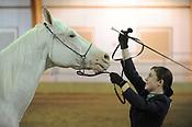 Washington County Fair horse show 8/26/2017
