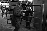 Photo © Tim Gander. All rights reserved. Tel: 07703 124412. Standerwick livestock market, Frome, Somerset.