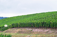 vineyard brand gc turckheim alsace france