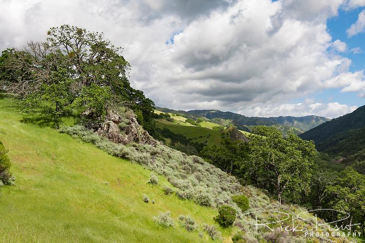 Sunol Regional Wilderness backcountry in Northern California's East Bay region.