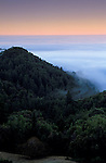 Fog bank at dawn, Santa Cruz Mountains, Santa Cruz County, California