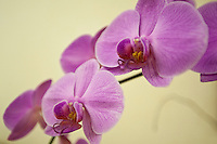 Orchids are a standard design element at the Four Seasons Resort and Spa in Irving, Texas, Sunday, May 2, 2010. Four Seasons couldn't abstain from cost cutting in this downturn as it had in previous recessions because the worst hotel market in decades left the company last year with a 26% decline in revenue per available room in the U.S. Similarly, its occupancy fell to 57% from its usual perch above 70%...CREDIT: Matt Nager for The Wall Street Journal.CREDIT: Matt Nager for The Wall Street Journal