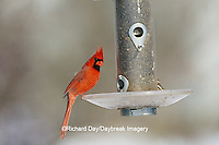 01530-12018 Northern Cardinal (Cardinalis cardinalis) male at sunflower tube feeder in winter Marion Co.   IL
