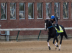 LOUISVILLE, KENTUCKY - MAY 01: Long Range Toddy prepares for the Kentucky Derby at Churchill Downs in Louisville, Kentucky on May 01, 2019. Evers/Eclipse Sportswire/CSM