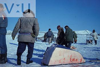Inuits dividing whale meat.