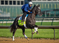 Frac Daddy, trained by Ken McPeek, during morning workouts for the Kentucky Derby at Churchill Downs in Louisville, Kentucky on April 30, 2013.