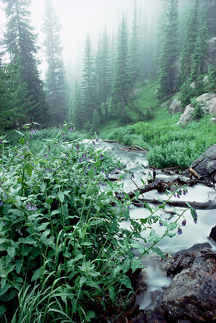 Tyndall Creek, morning, summer, plants, wildflowers, Rocky Mouintain National Park, Colorado