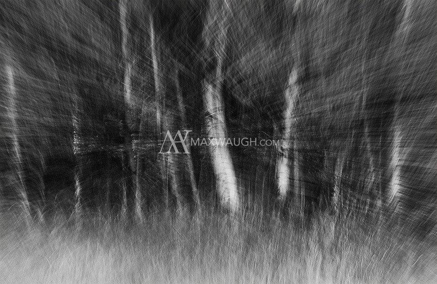 This is a monochrome conversion of a long exposure featuring autumn aspens. Aside from switching it to black and white, the effects were all created in camera during the shot.