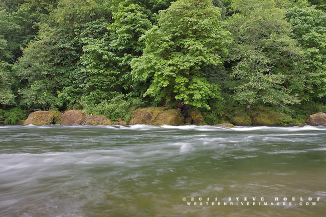 The Sandy River glides along boulders and verdant vegetation.