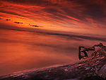 Dramatic dark red sunset nature scenery of driftwood on a shore of lake Huron. Ontario, Canada, Pinery Provincial Park.