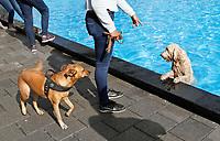Nederland  Rotterdam -  2017.  Het van Maanenbad.  Dogparade 010 Poolparty. Afsluiting van het zwemseizoen.    Foto Berlinda van Dam / Hollandse Hoogte