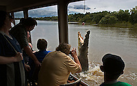 Jumping Crocodile on Adelaide River Queen Cruise where the reptiles are fed for tourists to see the performance.  The croc is capable of explosive bursts of speed when launching an attack from the water.<br /> <br /> Saltwater Crocodile is the largest of all living reptiles and is found in the Northern Territory. They are believed to grow to as large as 20 feet long. <br /> They can potentially eat any animal including monkeys, dangaroos, wild boar, dingos, birds, livestock, water buffalo, sharks and even humans.