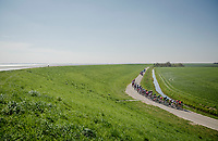 wind creating echelons in the peloton<br /> <br /> 107th Scheldeprijs (1.HC)<br /> One day race from Terneuzen (NED) to Schoten (BEL): 202km<br /> <br /> ©kramon