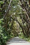 Landscape - Barbados