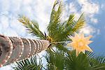 Palm Tree with Lights