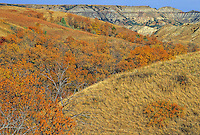 Tawny grasses and fall color ed shrubs and trees cover the mesas and buttes in Theodore Roosevelt National Park, North Dakota
