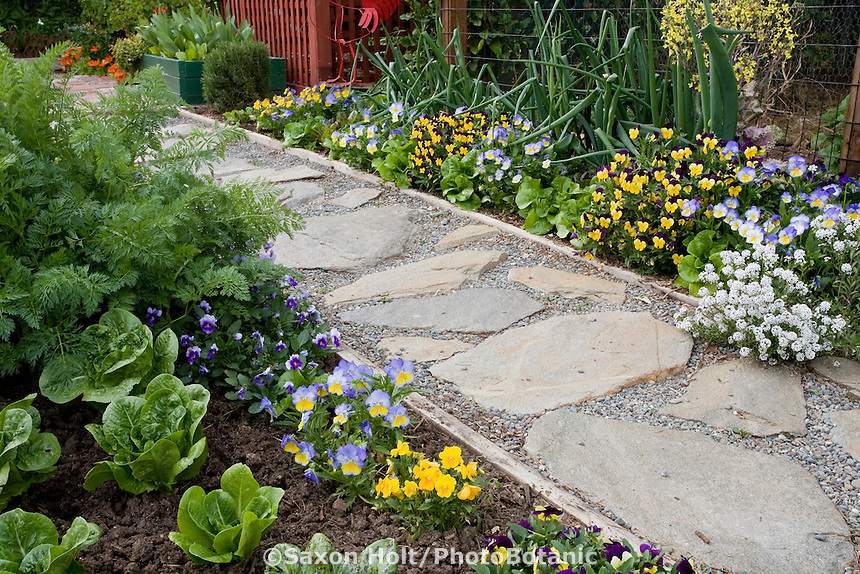 Stepping stone path set in pea gravel in ornamental edible garden; Rosalind Creasy front yard garden