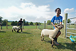 Eldana Teclamariam, a 12-year old resettled refugee from Eritrea, exercises her sheep on a farm in Linville, Virginia, on July 17, 2017. Teclamariam and other refugee youth, resettled in the area by Church World Service, are preparing to show sheep and goats in a county fair.<br /> <br /> Photo by Paul Jeffrey for Church World Service.