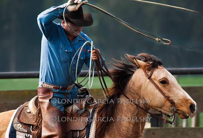 Cowboy roping at a cattle roundup in Cambria, Central Coast of California