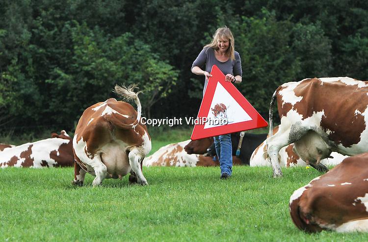 Foto: VidiPhoto..LAREN - Het is een ware hype aan het worden in agrarisch Nederland en ver daar buiten; de koeborden van Tine van Houselt uit het Gelderse Laren. De creatieve boerin beschildert verkeersborden met portretten van haar 'eigen' huppelende melkvee en gebruikt die als waarschuwingsbord bij de oversteekplaats van de dieren. De belangstelling voor de uitzonderlijke verkeersborden is zo groot dat zowel veehouders als particulieren in binnen- en buitenland een bestelling plaatsen bij de Gelderse boerin en er inmiddels een flinke wachtlijst is ontstaan..