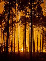 Fecha: 2017-11-22 Ribadeo, Lugo. .-Intensa Borrasca y fortísimo viento.- El temporal de viento en la costa y el interior deja rachas de 130 kilómetros por hora, afectando algunos puntos de la red eléctrica rural. En la costa de Lugo, en A Devesa, en el lugar de Noceda, cerca de la playa de las Catedrales se han declarado varios focos de incendios forestales, que con este viento resultan peligrosos, y afectan ya a varias hectáreas de bosque, sobre todo eucalipto. La lluvia que comienza a caer, y esta ayudando a los bomberos forestales. Alguna carretera secundarias cortada cerca de la Autovia A-8, por culpa del incendio. Tambien esta cortada a vehículos pesados por el fuerte viento la A-8 a la altura de Mondoñedo.