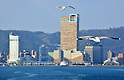 March 20, 2016, Kagawa, Japan - Seagulls fly over Takamatsu's tallest building Symbol Tower in Takamatsu city in Kagawa prefecture on Sunday, March 20, 2016. Takamatsu is the gateway of islands in Seto mediterranean sea, where Setouchi Triennale art exhibition will be held in 2016 until November.  (Photo by Yoshio Tsunoda/AFLO)