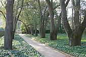Umbrella of trees, the Hopelands, Aiken, SC.