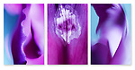 Close-up photographic triptych of purple gladiola flowers.