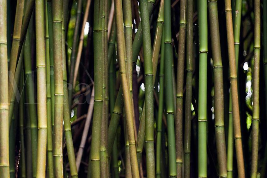 Bamboo, Oahu, Hawaii