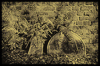 Faux Color infrared of headstones and ferns in Charleston, SC