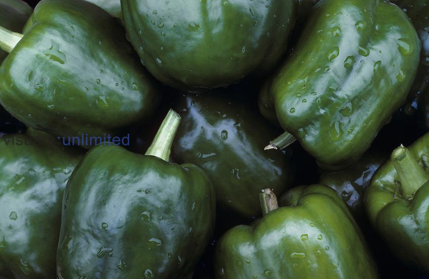 Bell Boy Green Sweet Pepper (Capsicum annuum).