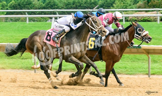 Barnards Galaxy winning at Delaware Park on 6/8/17