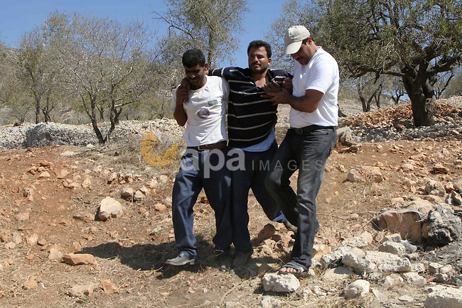 Palestinian farmers carrying a Palestinian farmer who was wounded after scuffles with Israeli settlers , in the village of Burin, near Nablus in the West Bank , Monday, Sept. 20,2010 . Palestinian farmers said the Israelis settlers from the settlement on Yizhar  attack  farmers and wounded one of the farmers. Photo by Wagdi Eshtayah