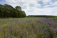 Pollen & Nectar mix on a field margin <br /> ©Tim Scrivener Photographer 07850 303986<br />      ....Covering Agriculture In The UK....