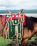 MONGOLIA, horse with a traditional saddle, Toilogt Ger Camp, Lake Khuvsgul