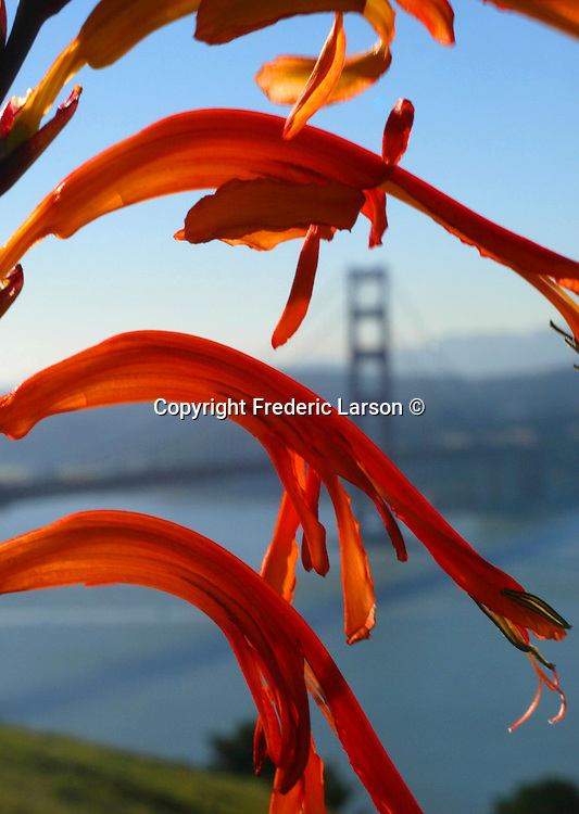 Spring and hay fever run hand and hand as spring flower blossom bring running noses of many Bay Area residents who suffers with this annual affliction.