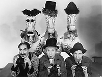 A Day at the Races (1937)<br /> Groucho Marx, Harpo Marx, Chico Marx (The Marx Brothers)<br /> *Filmstill - Editorial Use Only*<br /> CAP/MFS<br /> Image supplied by Capital Pictures
