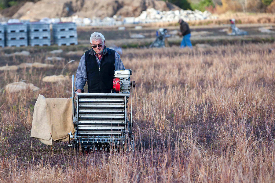 """Cranberry grower, Ray Thacher's father, Raymond """"Linc"""" Thacher, enjoys a cigar while helping his son with the dry harvest. """"Linc"""" first started growing cranberries in the 1950's and is still actively involved in the family business."""