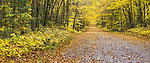 An autumn road in the Chequamegon National Forest.